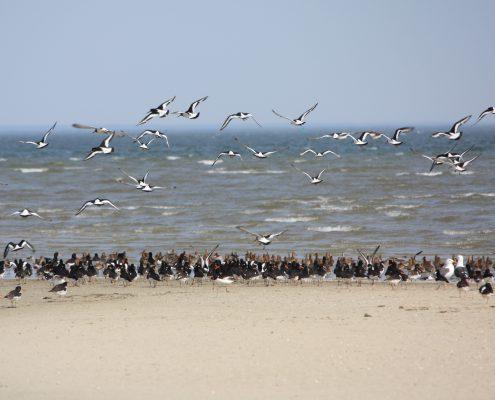 einzigartige Vogelwelt © Janina Voskuhl